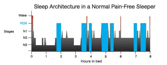Điều gì quyết định khi chúng ta ngủ